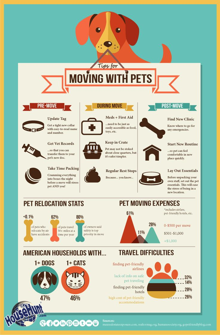 moving_with_pets_1119